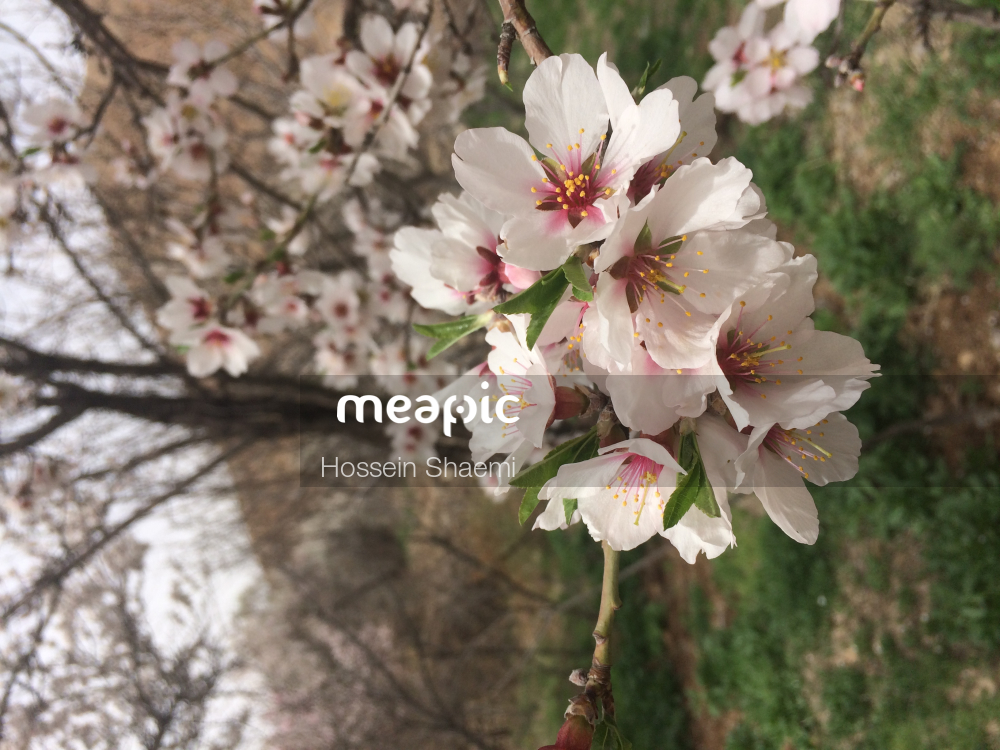 Vase Of Flowers On A Tree Stock Photo · Meapic