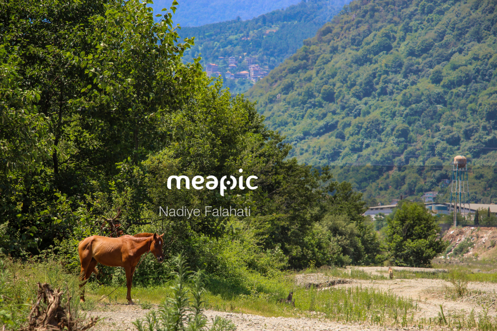 Herd Of Cattle Standing On Top Of A Lush Green Field Stock Photo · Meapic