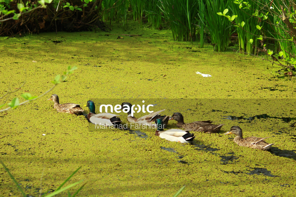 Flock Of Birds Sitting On Top Of A Grass Covered Field Stock Photo · Meapic