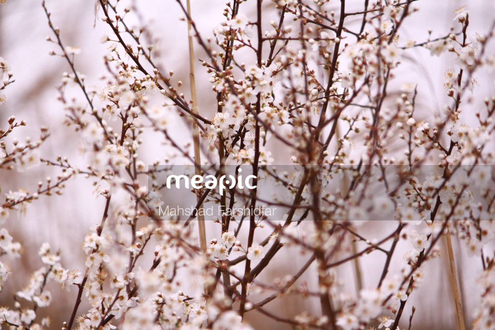 Close Up Of A Tree Branch Stock Photo · Meapic