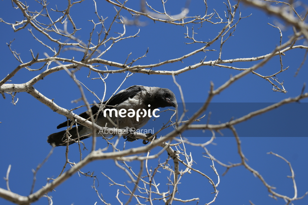Small Bird Perched On A Tree Branch Stock Photo · Meapic