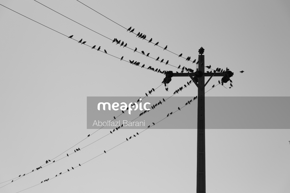 Flock Of Birds Flying In The Sky Stock Photo · Meapic