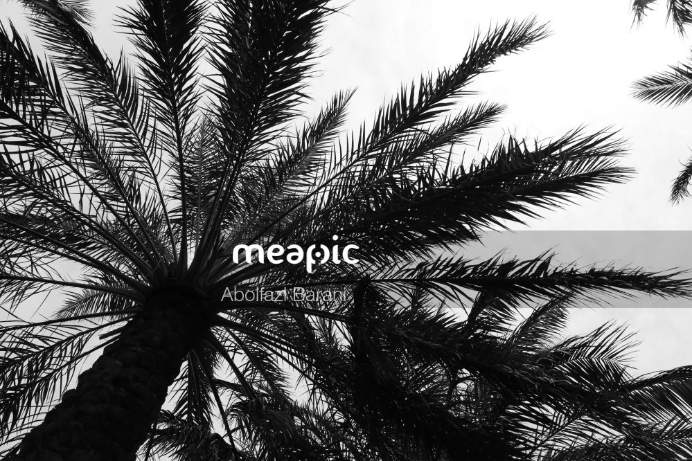 Palm Tree Stock Photo · Meapic