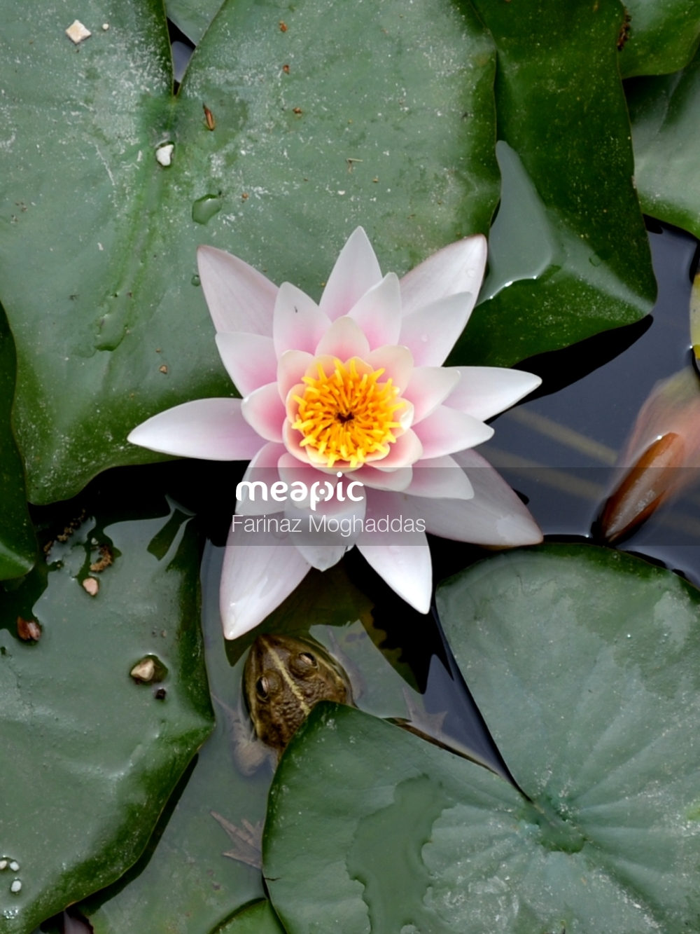 Cactus In A Pond Stock Photo · Meapic