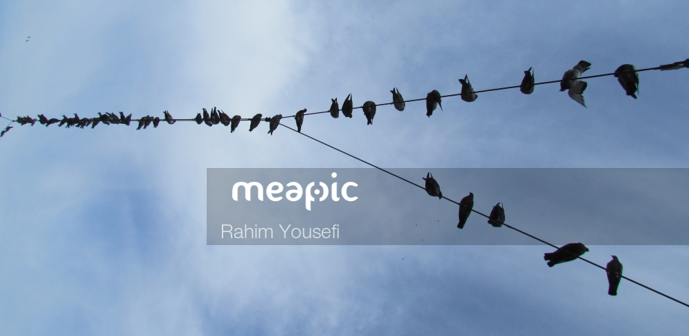 Flock Of Birds Sitting On A Wire Stock Photo · Meapic