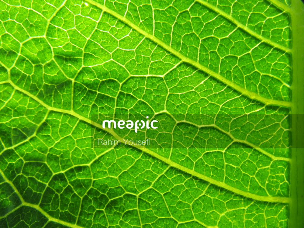 Close Up Of A Green Plant Stock Photo · Meapic