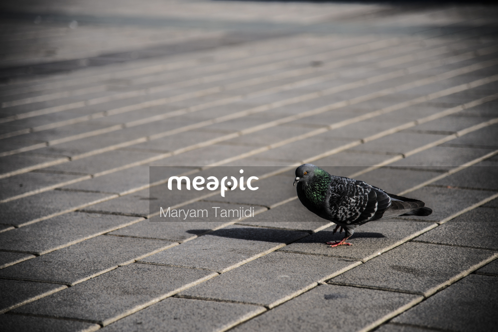 Bird Sitting On Top Of A Sidewalk Stock Photo · Meapic