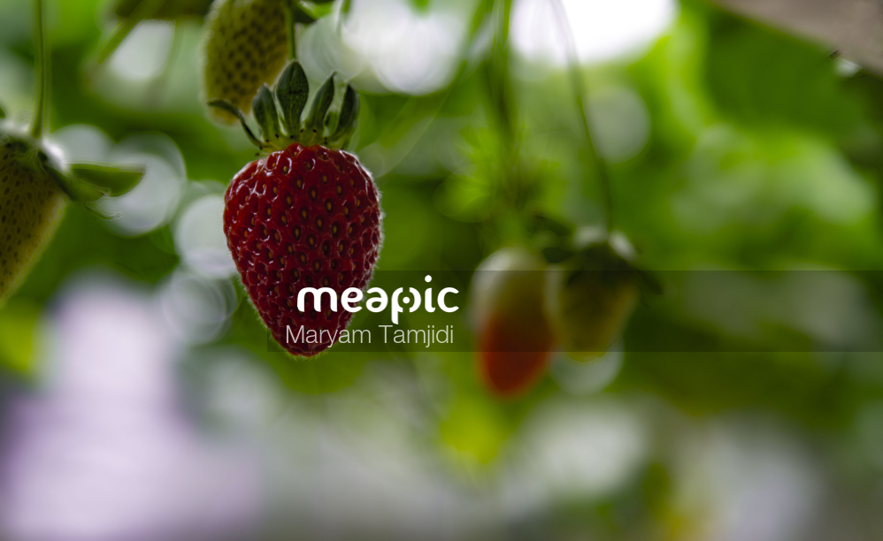 Strawberry Stock Photo · Meapic