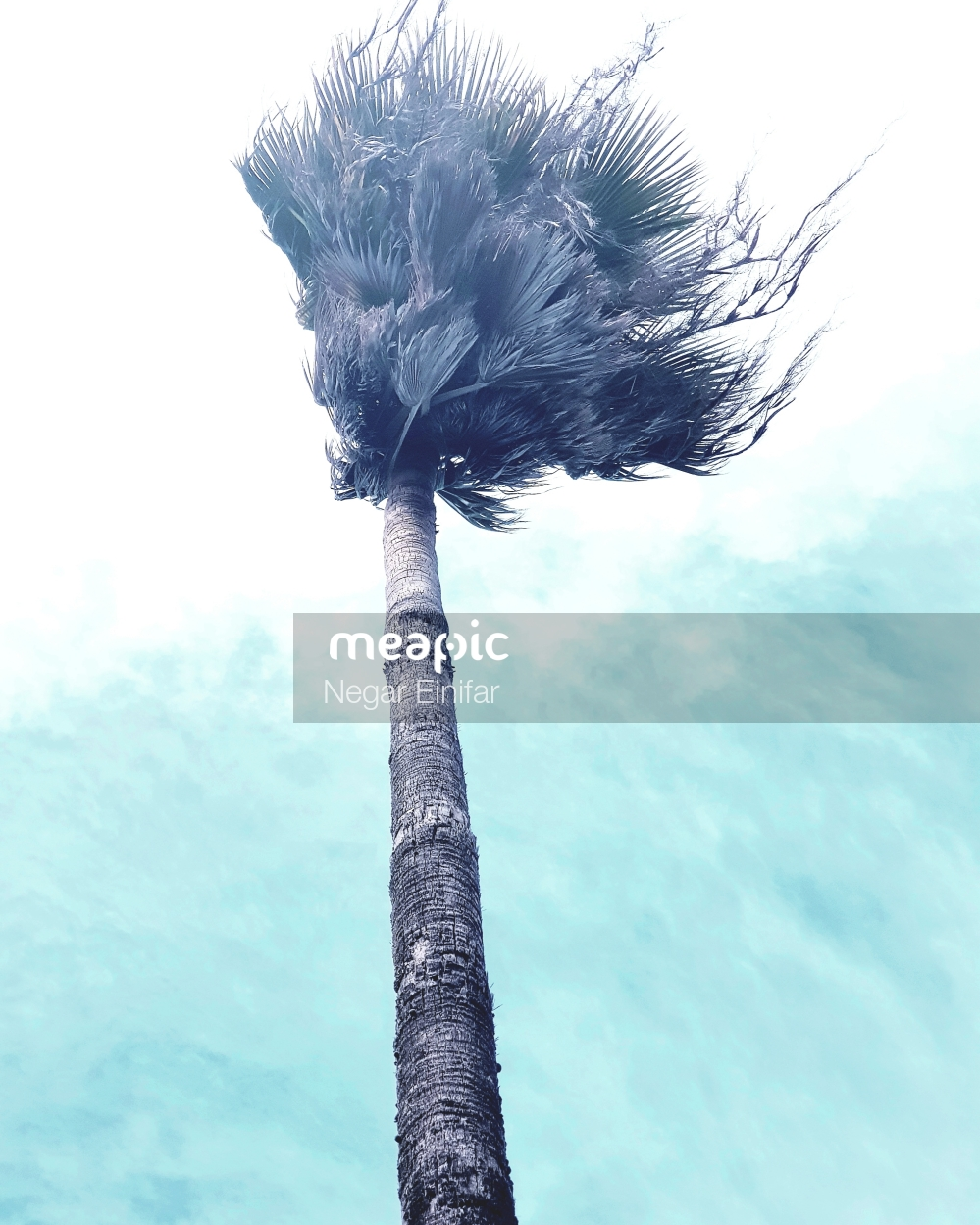Tree In Front Of A Palm Tree Stock Photo · Meapic