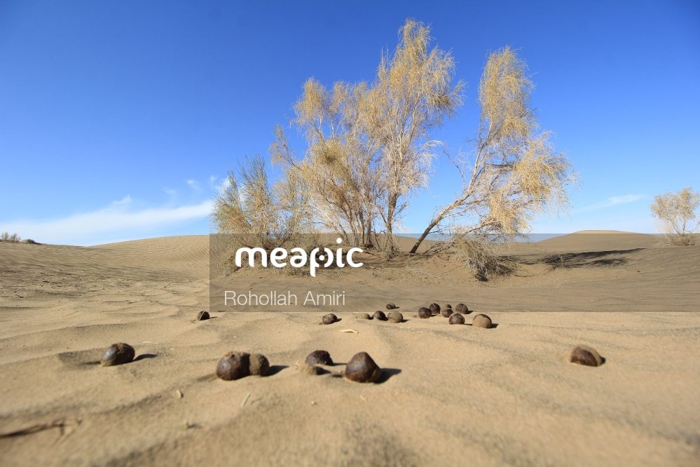 Herd Of Sheep Walking In The Sand Stock Photo · Meapic