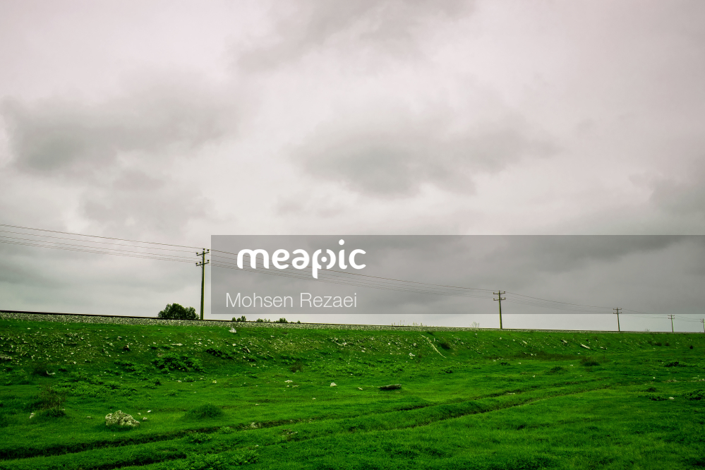 Close Up Of A Lush Green Field Stock Photo · Meapic
