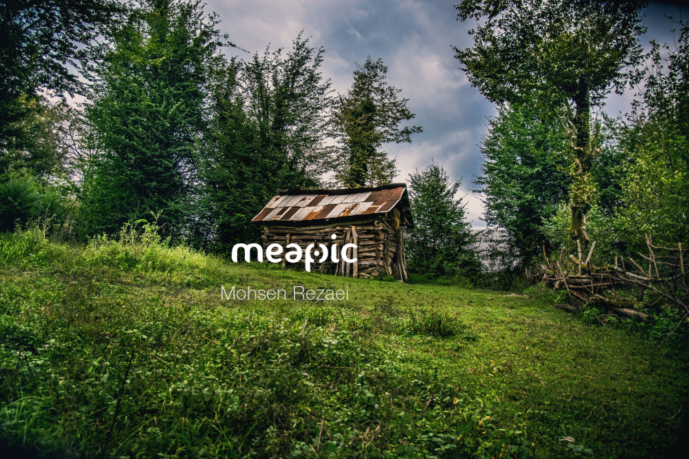 Close Up Of A Lush Green Forest Stock Photo · Meapic