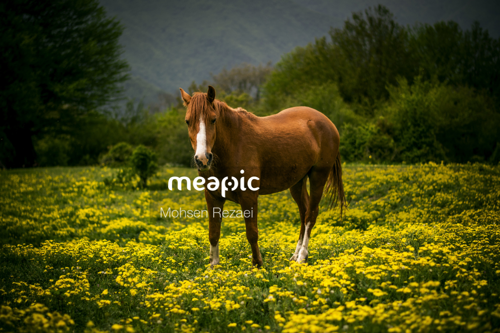Brown Cow Standing On Top Of A Lush Green Field Stock Photo · Meapic