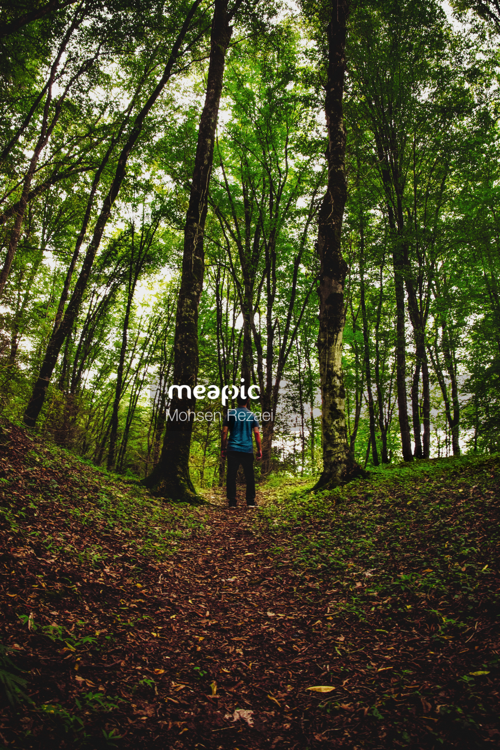 Group Of People In A Forest Stock Photo · Meapic