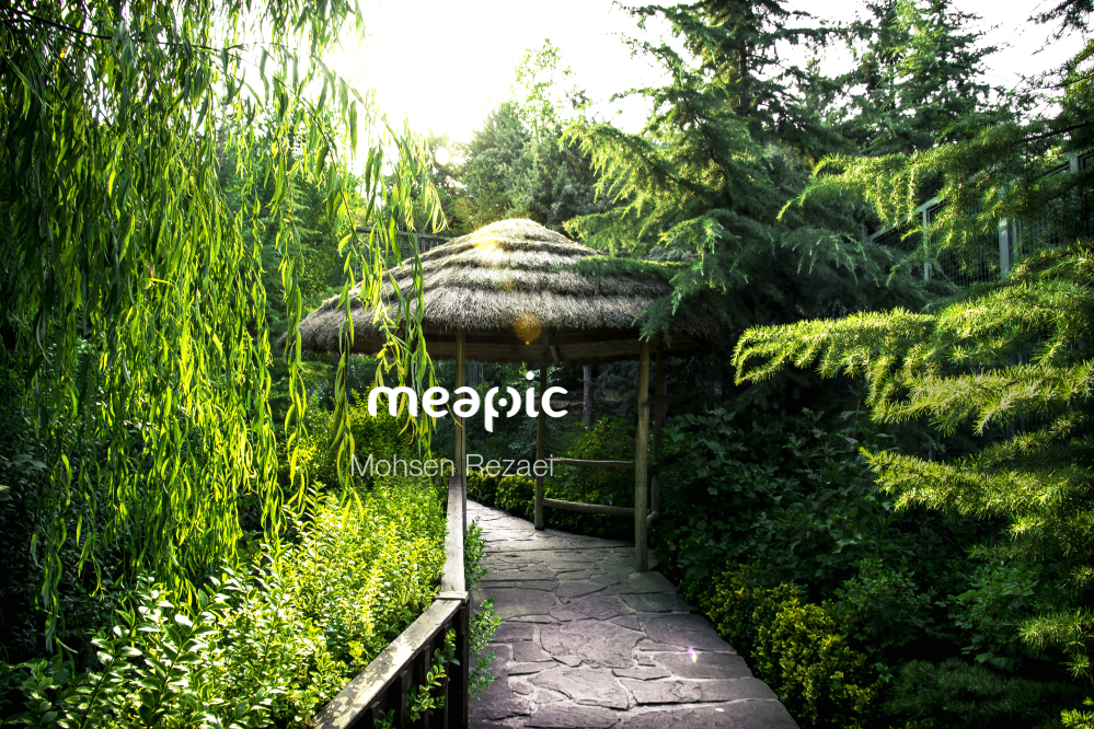 Tree In A Garden Stock Photo · Meapic