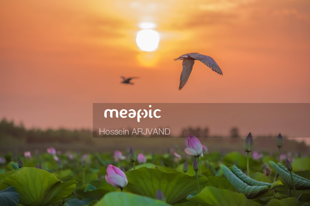 Close Up Of A Bird Flying In The Sky Stock Photo · Meapic