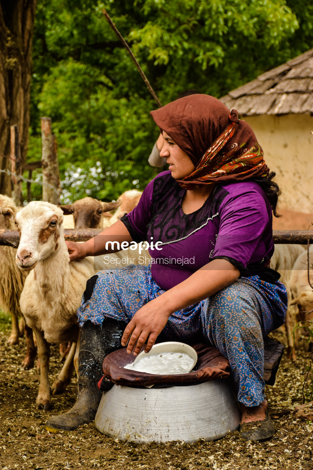 Person Petting A Sheep Stock Photo · Meapic