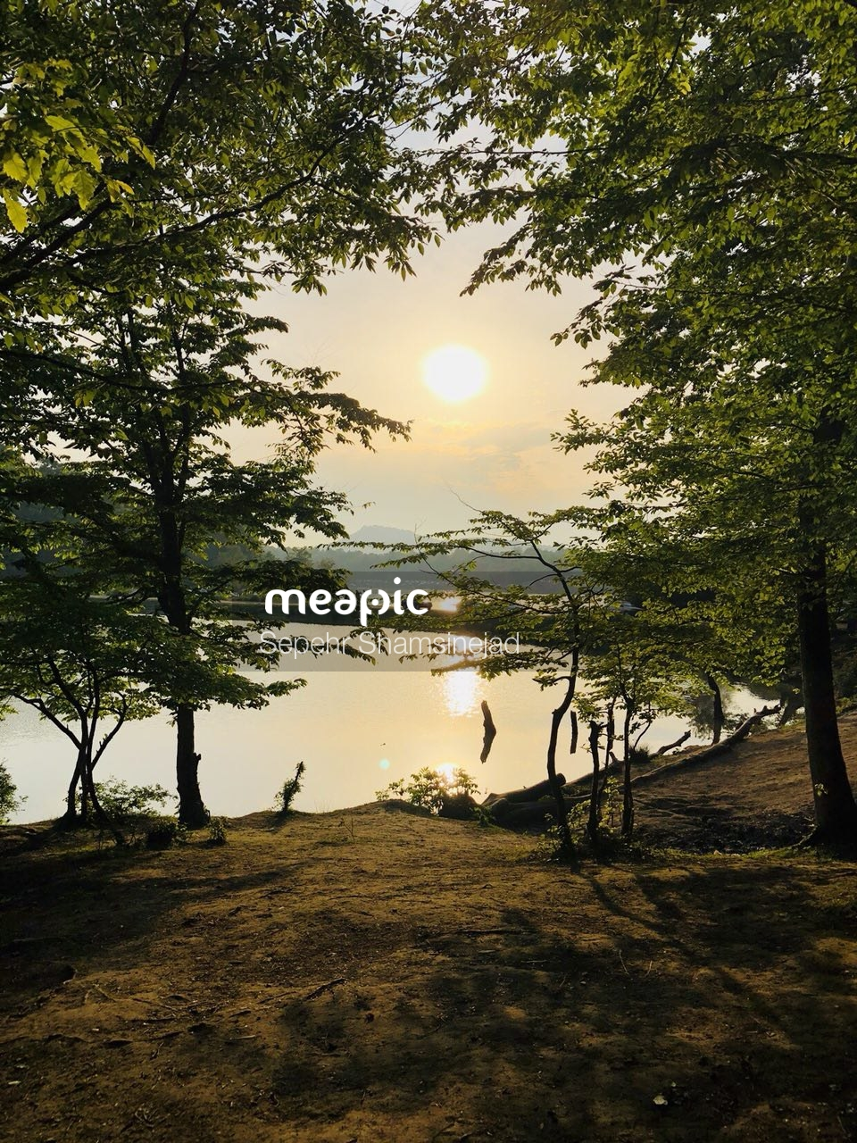 Tree Next To A Body Of Water Stock Photo · Meapic