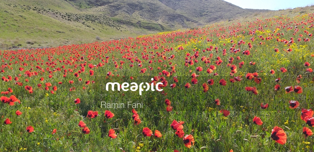 Red Flower In A Field With A Mountain In The Background Stock Photo · Meapic