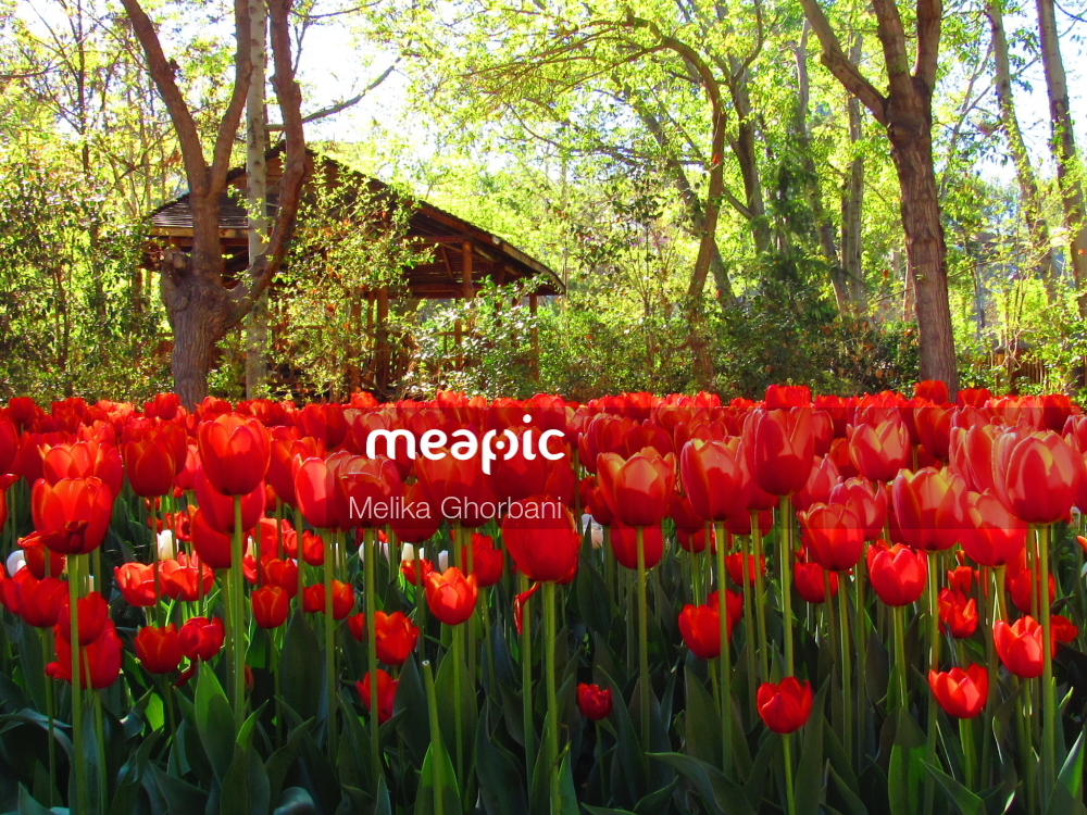 Red Flower In A Garden Stock Photo · Meapic
