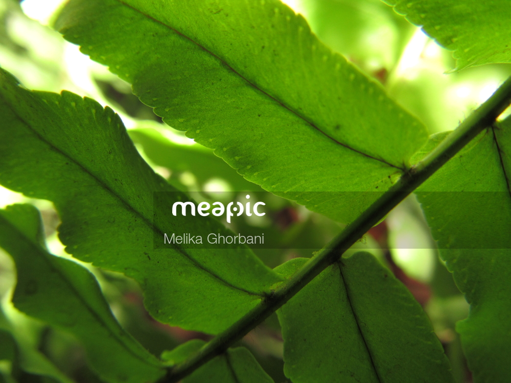 Close Up Of A Leaf Stock Photo · Meapic