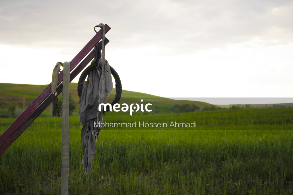 Horse Standing On Top Of A Grass Covered Field Stock Photo · Meapic