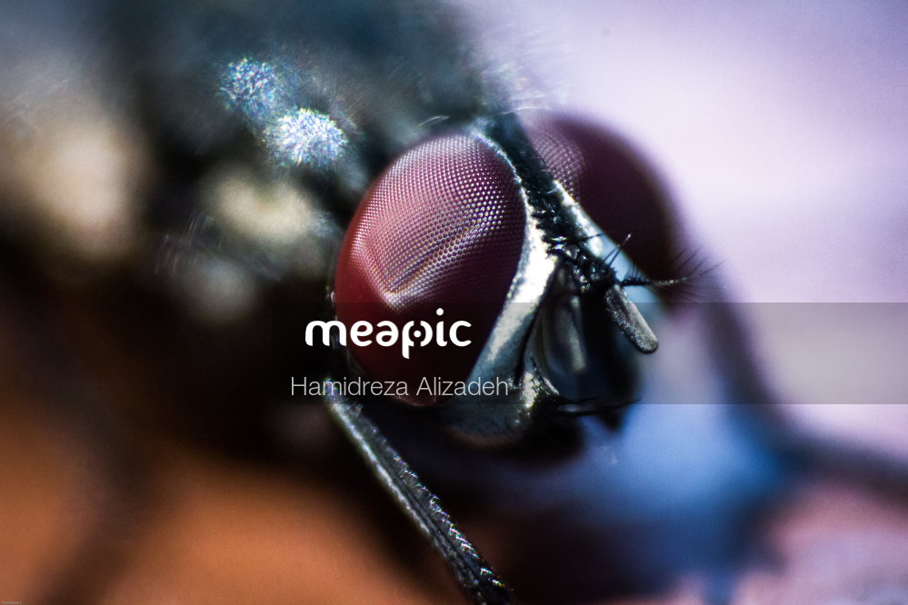 Close Up Of An Animal Stock Photo · Meapic