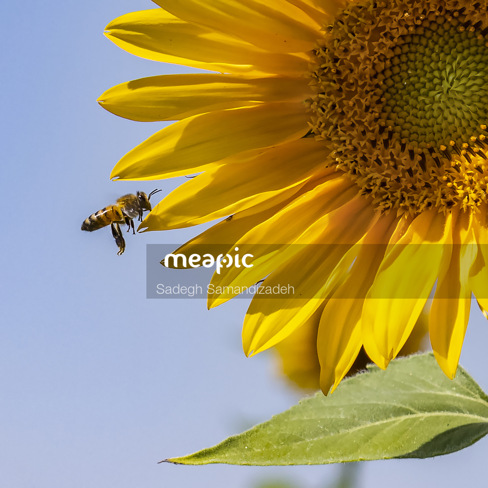 Close Up Of A Yellow Flower Stock Photo · Meapic