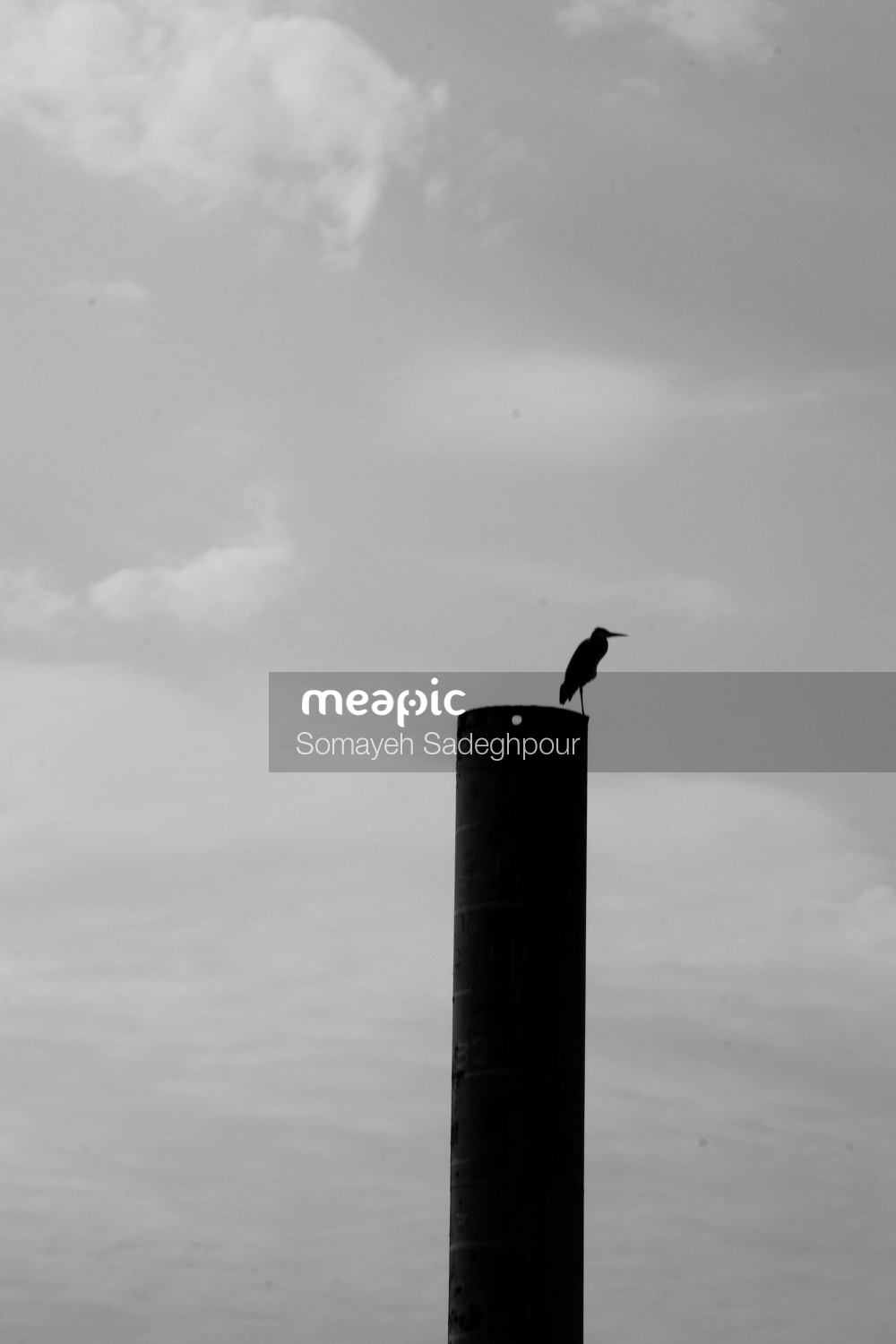 Bird Flying In The Sky Stock Photo · Meapic