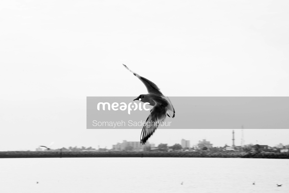 Bird Flying Over A Body Of Water Stock Photo · Meapic