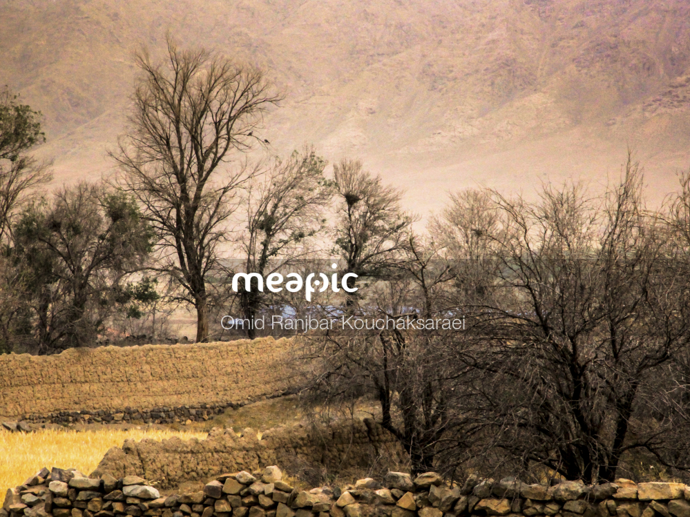 I Am Not Really Confident, But Herd Of Sheep Grazing On A Dry Grass Field Stock Photo · Meapic