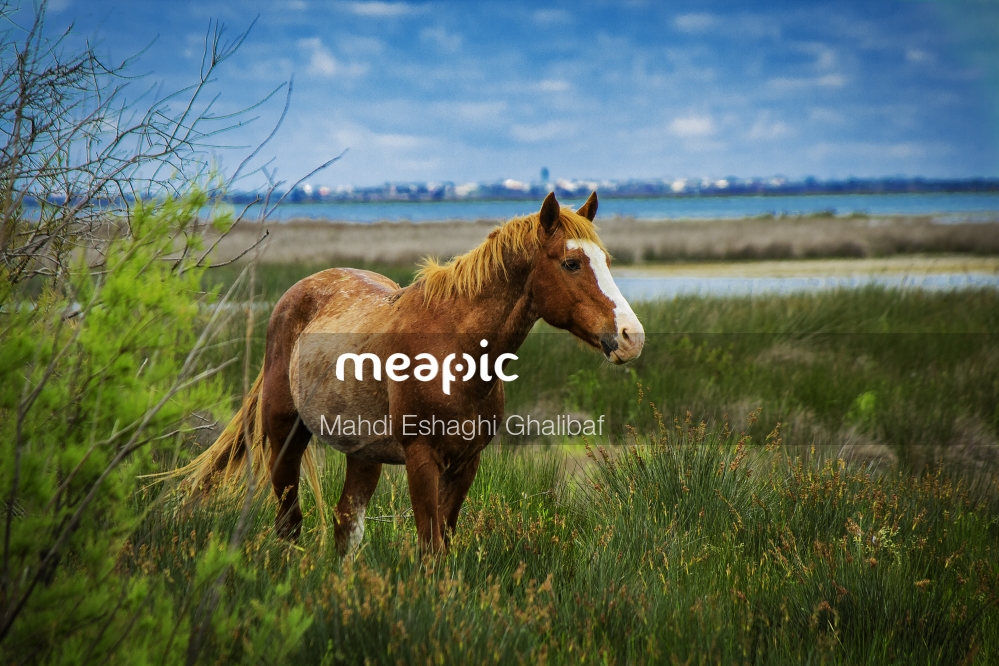 Brown Horse Standing Next To A Green Field Stock Photo · Meapic