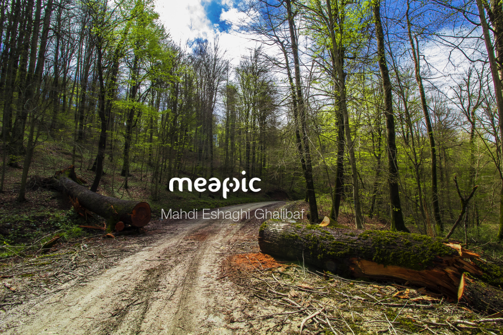 Dirt Path In A Forest Stock Photo · Meapic