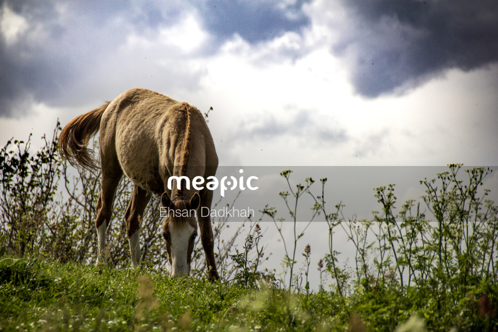 Brown Horse Standing On Top Of A Lush Green Field Stock Photo · Meapic