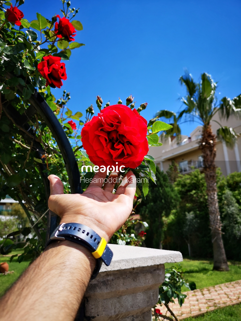 Person Holding A Flower Stock Photo · Meapic