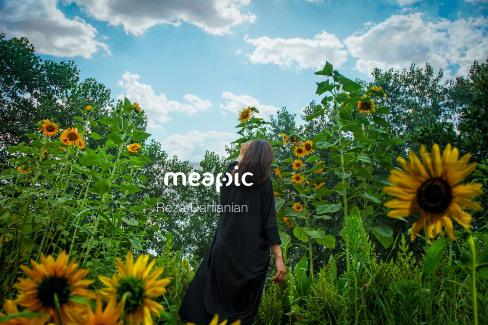 Person Standing In Front Of A Yellow Flower Stock Photo · Meapic