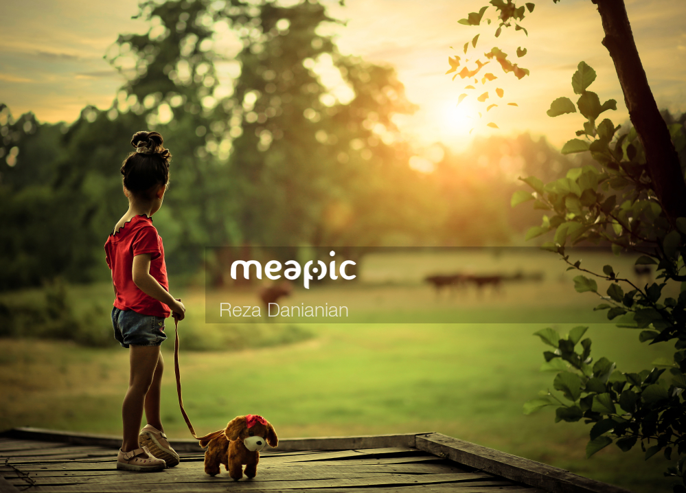 Person Walking With A Dog Stock Photo · Meapic