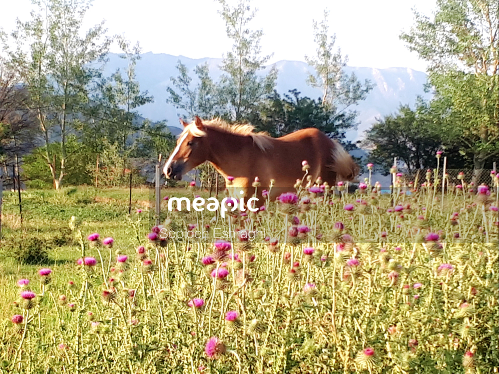 Cow Standing On Top Of A Grass Covered Field Stock Photo · Meapic