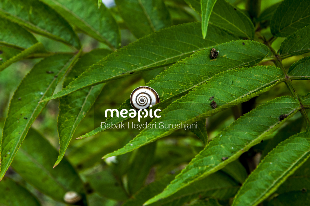 Helix Stock Photo · Meapic
