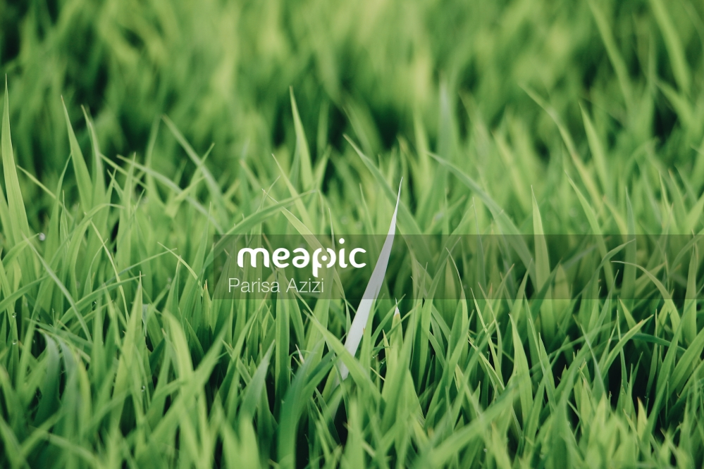 Close Up Of Some Grass Stock Photo · Meapic