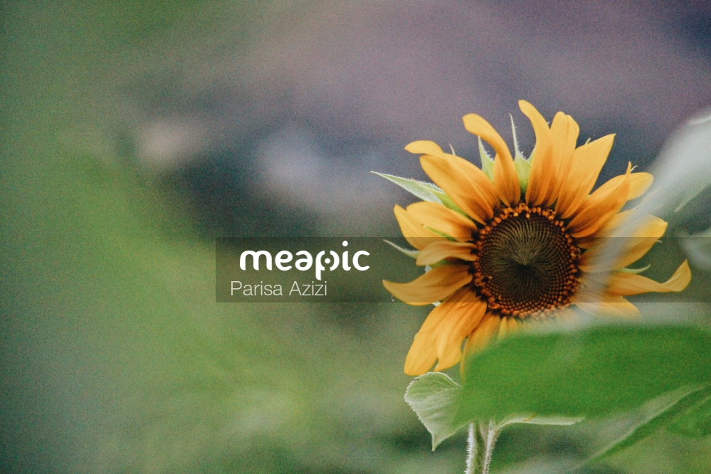 Yellow Flower With Green Leaves Stock Photo · Meapic