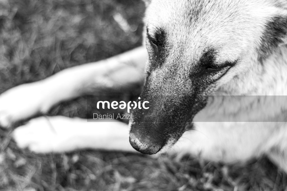 Close Up Of A Dog Stock Photo · Meapic