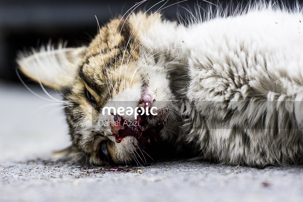 Cat Lying On The Ground Stock Photo · Meapic