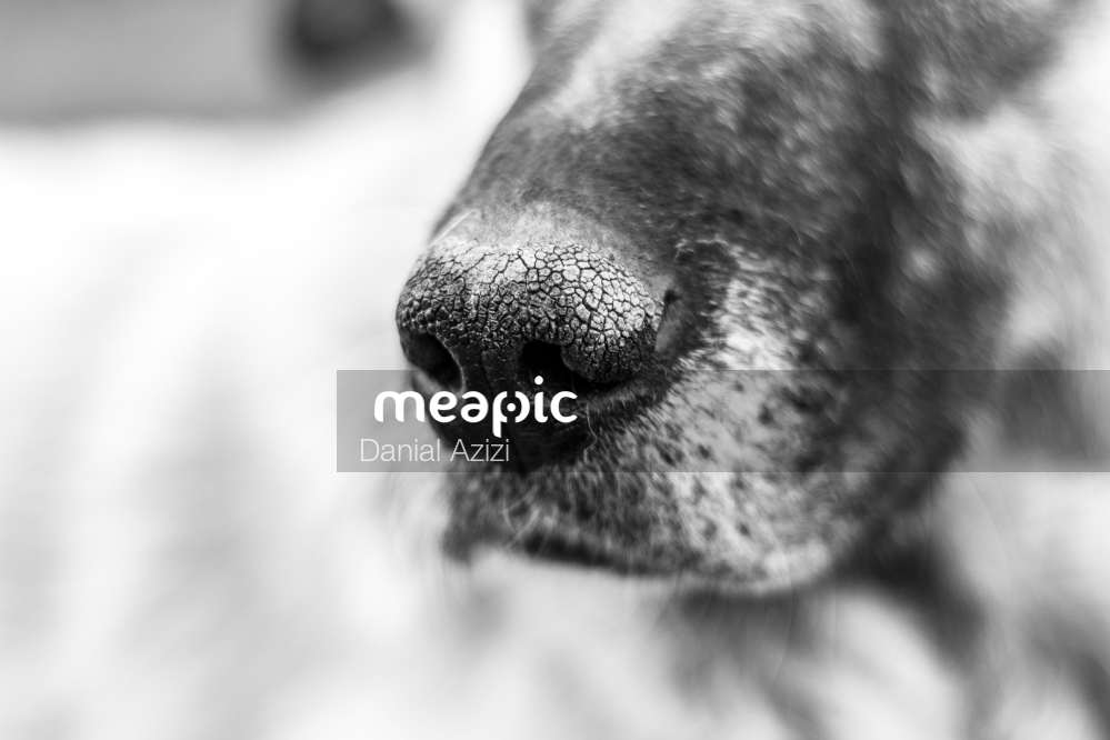 Close Up Of A Dog Looking At The Camera Stock Photo · Meapic