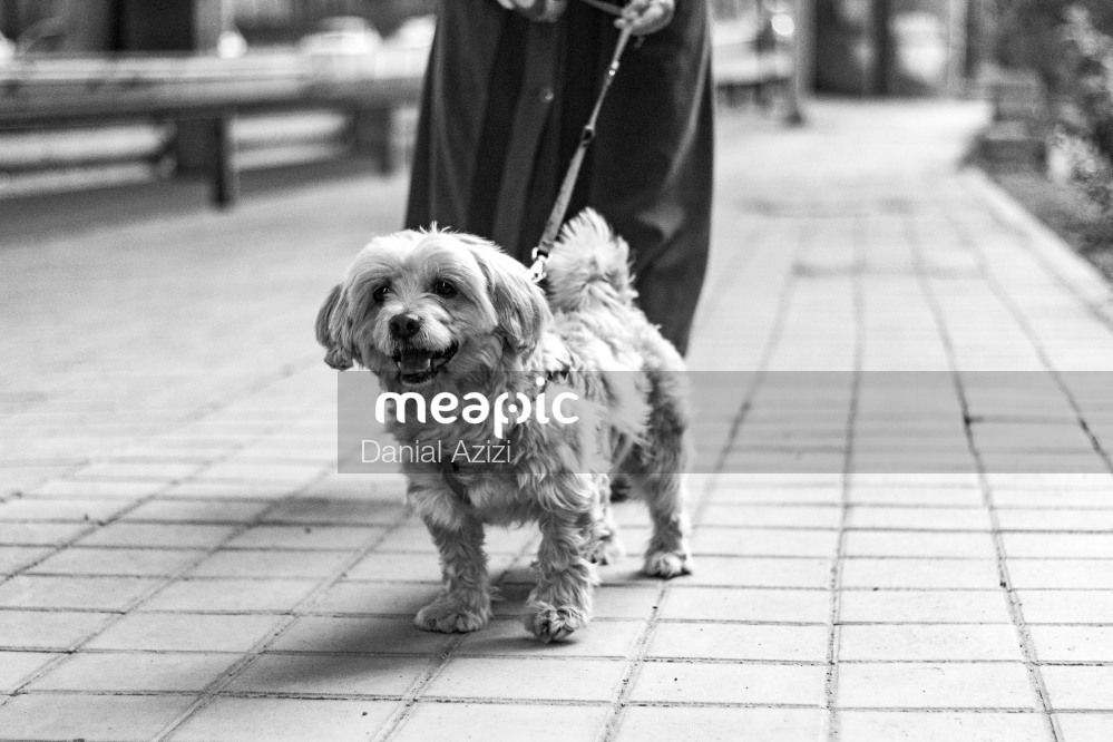Dog Standing On A Sidewalk Stock Photo · Meapic