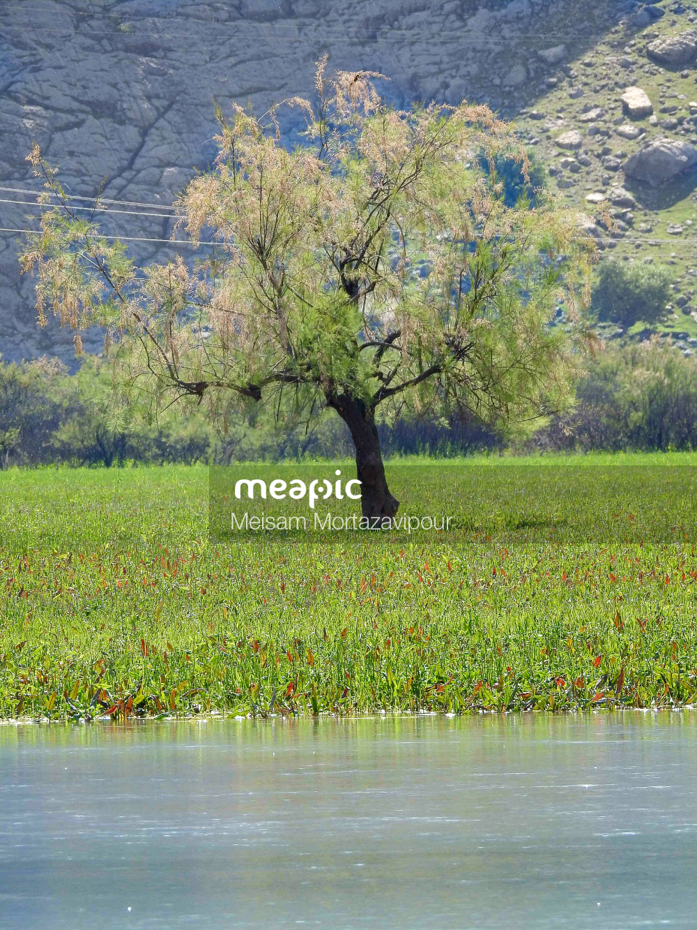 Body Of Water Surrounded By Trees Stock Photo · Meapic