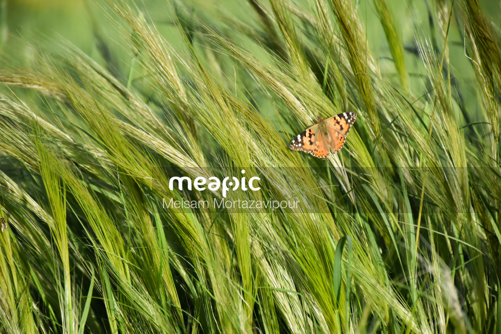 Bird Sitting On Grass Stock Photo · Meapic