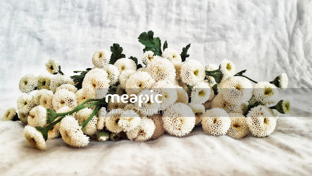 Whiteflowers Stock Photo · Meapic