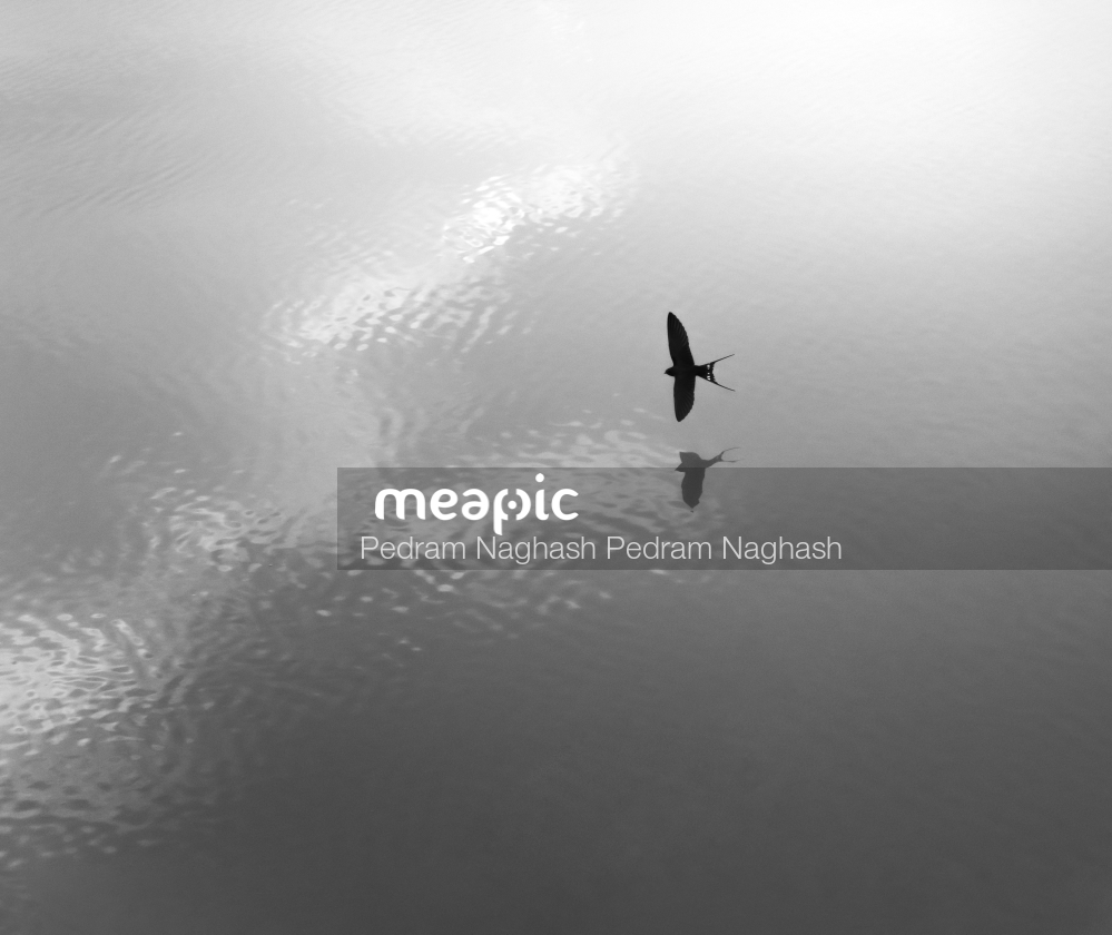 Swallow Stock Photo · Meapic