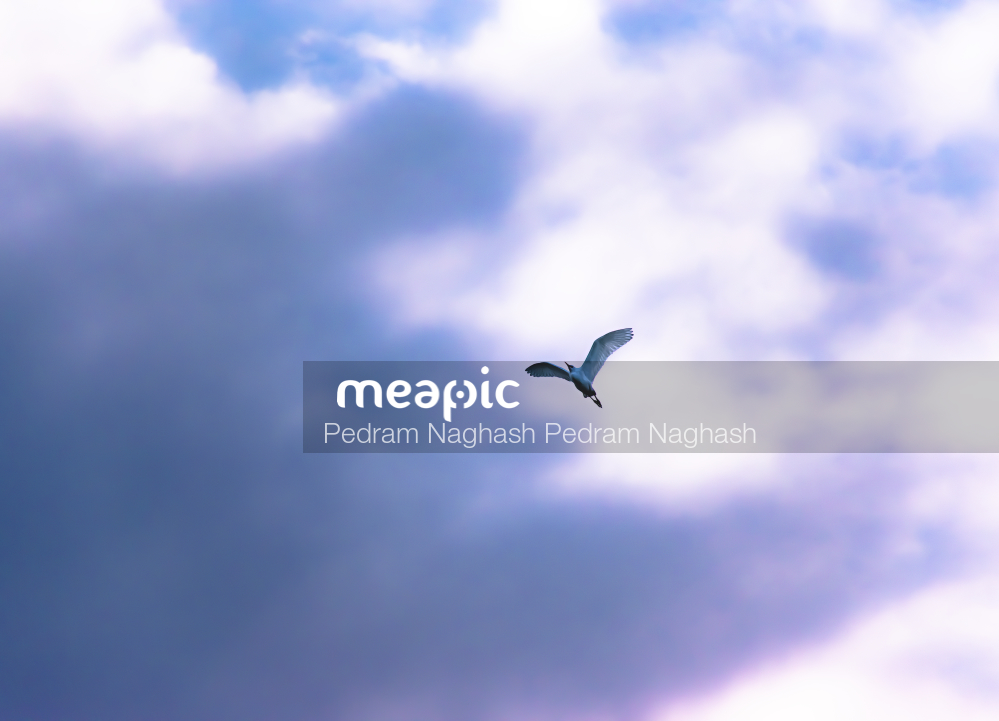 Seagull In The Sky Stock Photo · Meapic